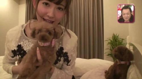 小嶋陽菜の犬の画像